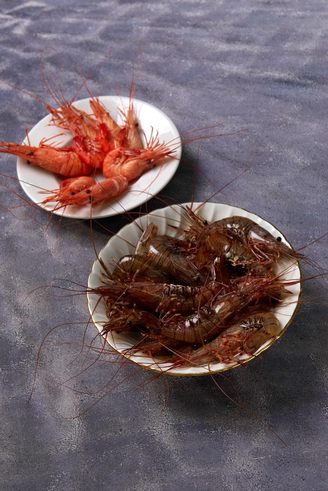 poissons er crustacés du Finistère