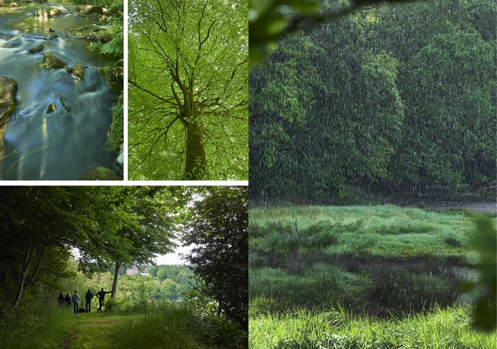 foret rivière printemps