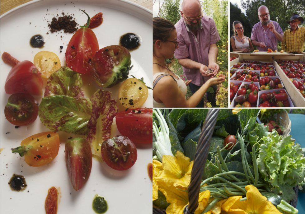 tomates et légumes bio