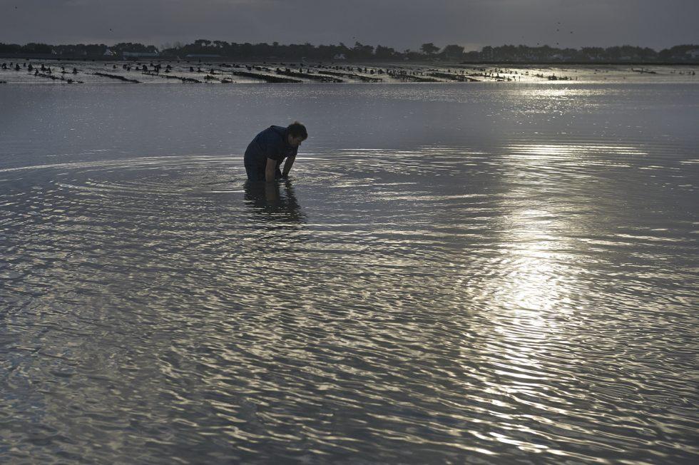 Henri Pellen peche aux huitres sauvages , Ile Tudy