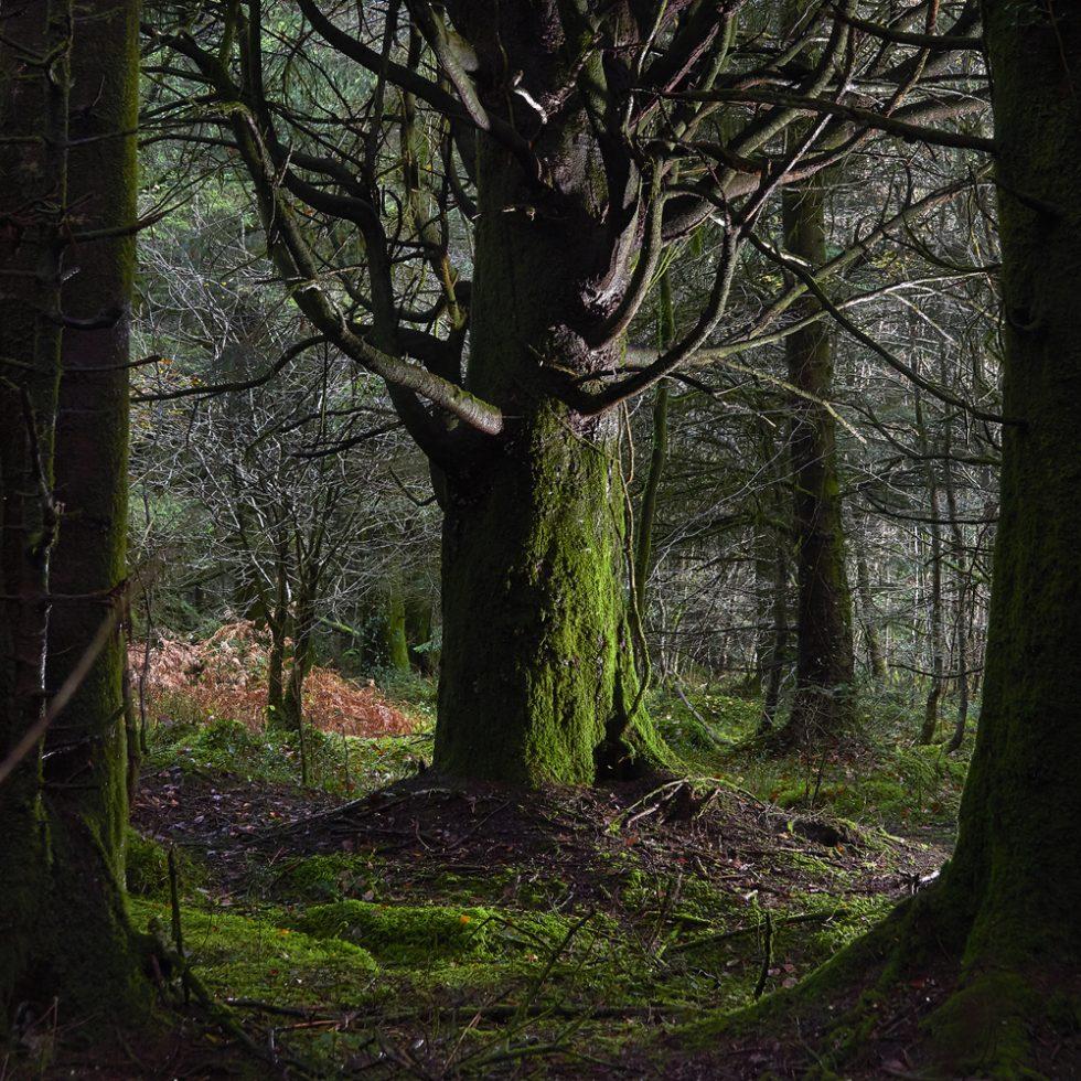photographie d'arbres en forêt du Cranou - Finistère