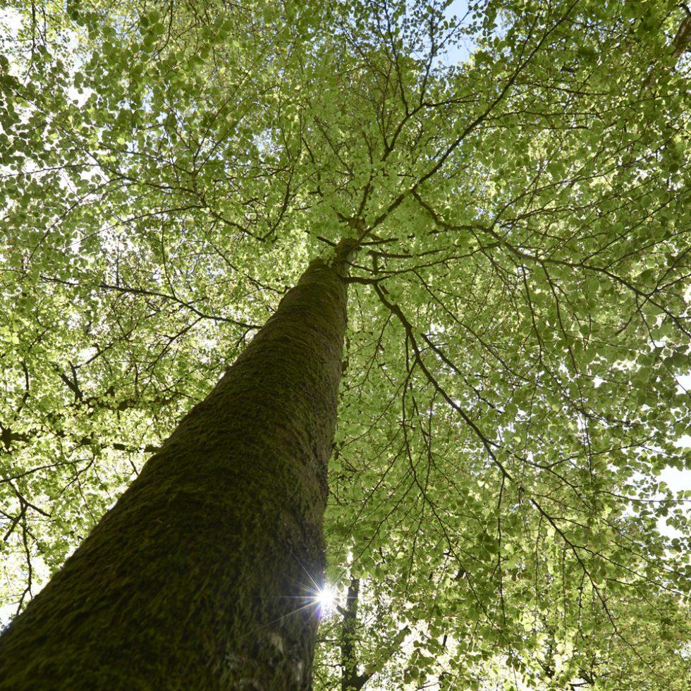 photo d'arbre en forêt Huelgoat printemps Finistère