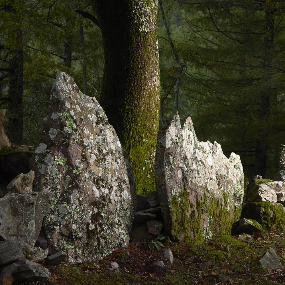 arbres en foret Pays Basque